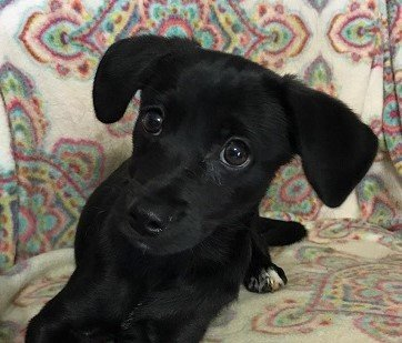 Read more about the article Zwei Hundebabies suchen ein Zuhause
