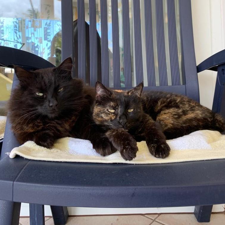 Katzenpärchen sucht zusammen ein neues Zuhause