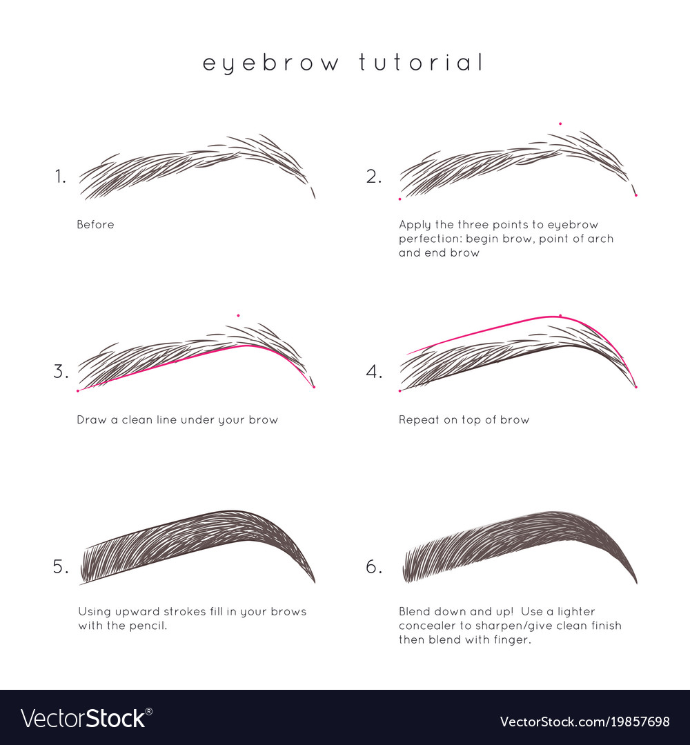 eyebrow-tutorial-vector-19857698.jpg