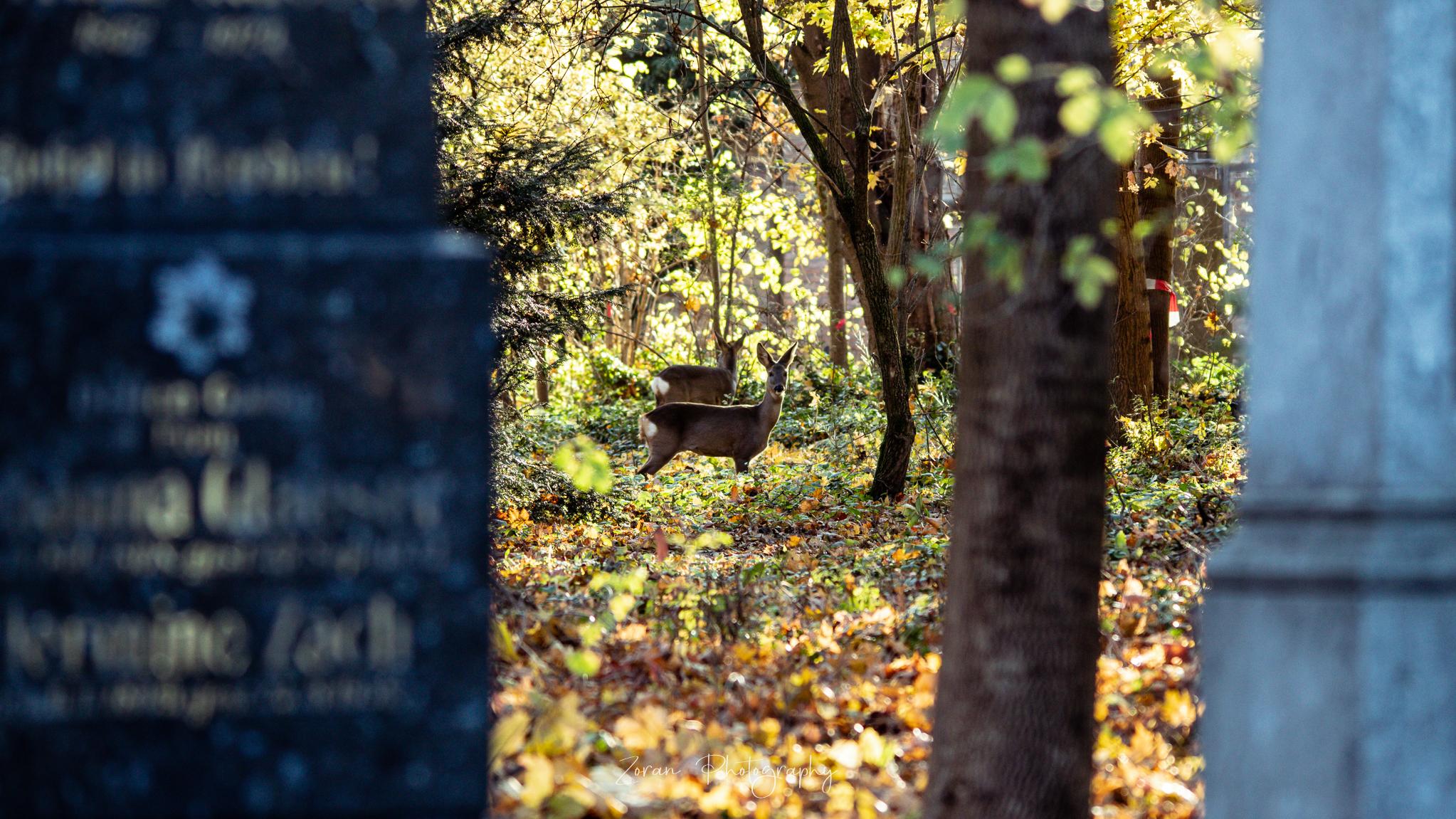 Bečani posjećuju digitalno groblje
