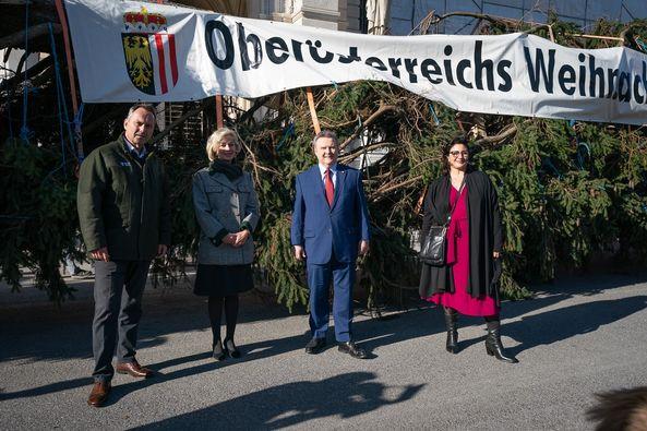 Božićno drvce na bečkom Christkindlmarktu ove godine iz Gornje Austrrije