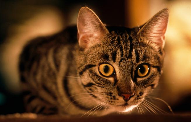 Stručnjaci dokazali: Vaša mačka doista vidi ono što je vama nevidljivo! Tajna je u posebnoj vrsti zračenja