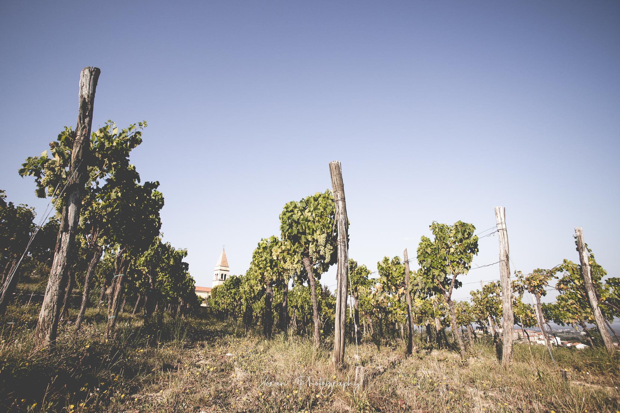 Komisija odobrila oznaku zemljopisnog podrijetla za hrvatsko vino