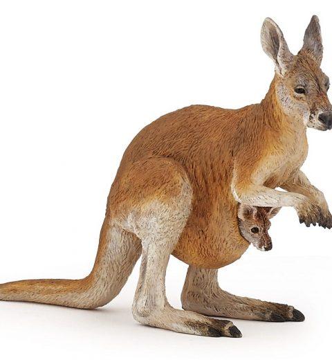 kenguru mot hvit bakgrunn