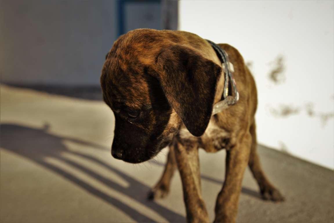 Kapitel 11: Die Baja California und ein Hund namens Zora
