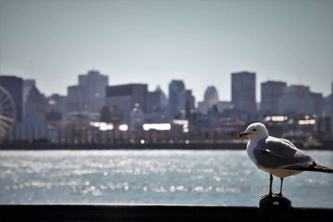 Bildergalerie 1: Von Toronto nach Halifax