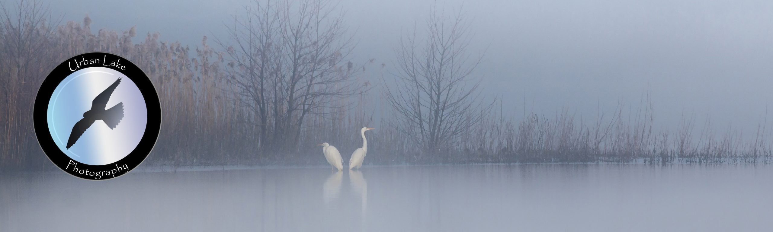 Urban Lake Photography