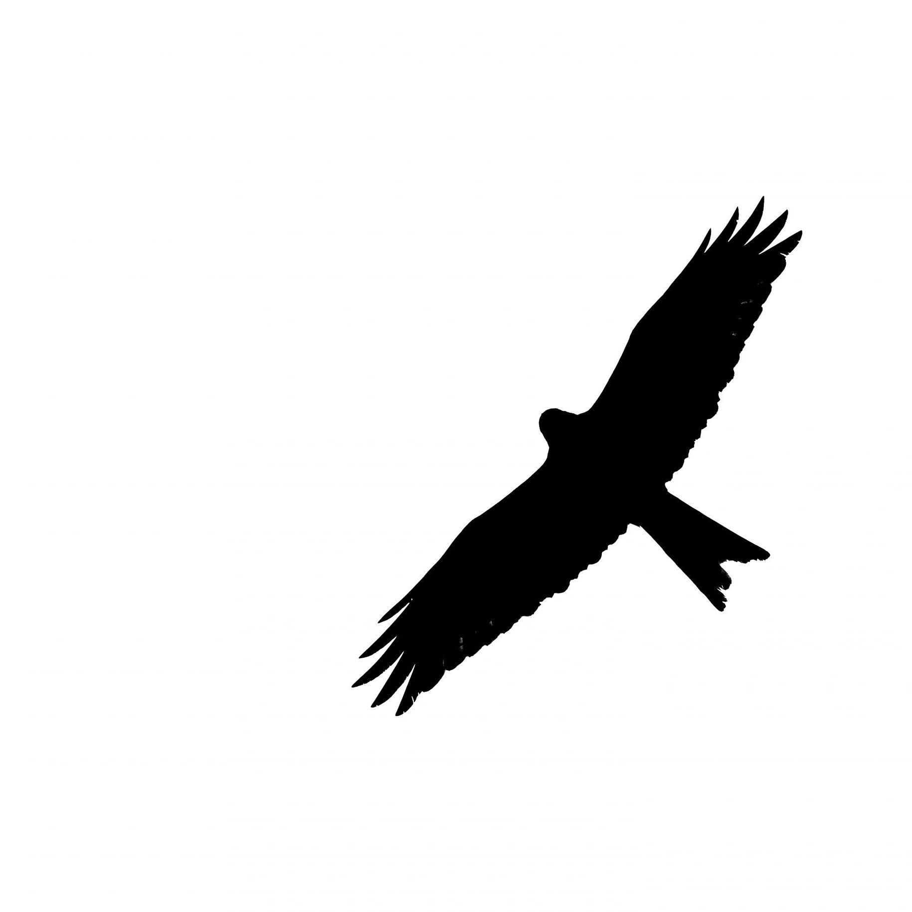 Fine Art Photography - Bird Silhouettes