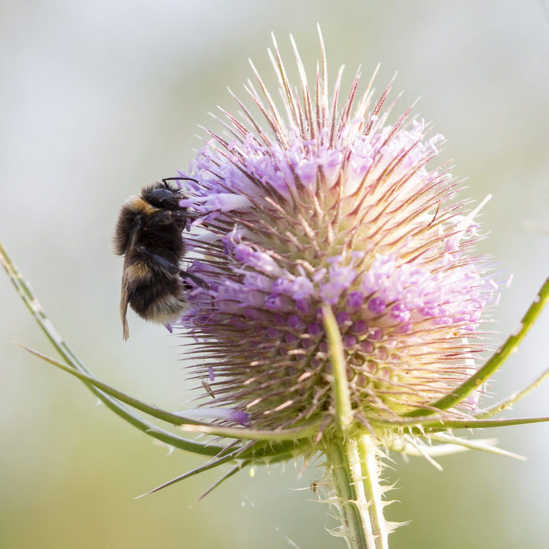 Bees, Wasps, & Flies