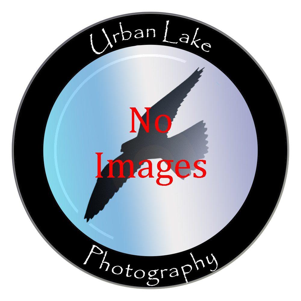 No images