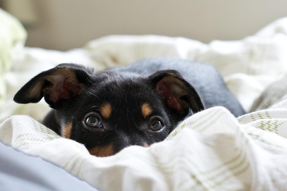 När, var och hur ska en valp sova?