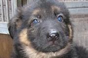Ciska als pup