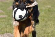 Hindyana speelt met bal