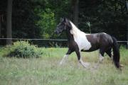 Paard Indira
