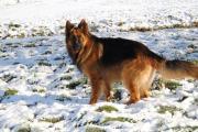 Herder Raoul in de sneeuw