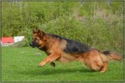 Raoul aan het rennen