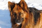 Raoul aan het rusten in sneeuw