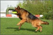 Raoul heeft frisbee te pakken
