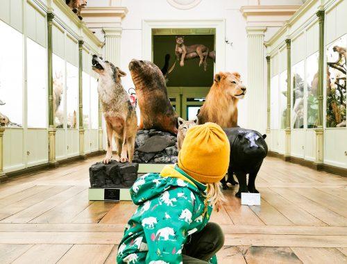 Tussen de wilde dieren met kinderen in Doornik