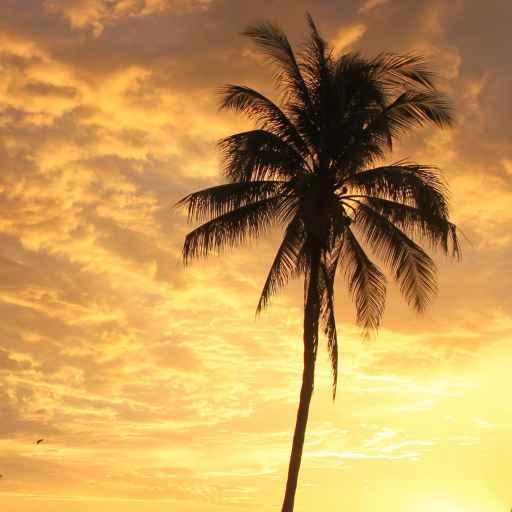 Logo von varadero-kuba.de Kokospalme im Sonnenuntergang
