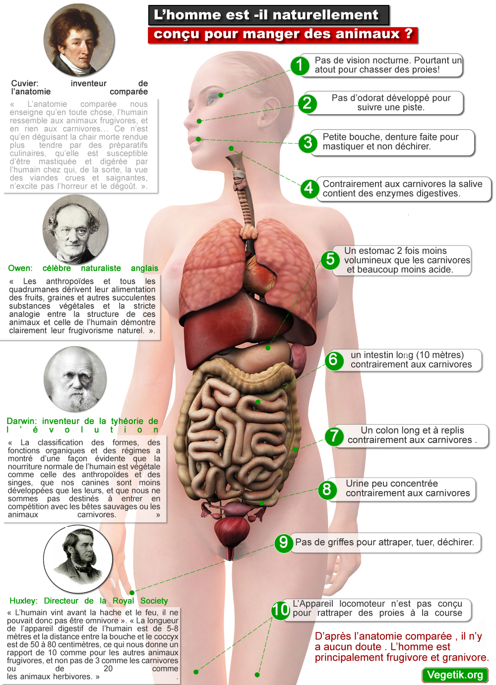anatomieompg