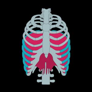 Diafragma3