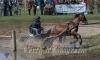 Paarden Menwedstrijd 2015
