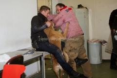 Oefening Politie Buggenum 166