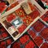 rode bessen kopen