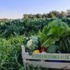 groenten lokeren