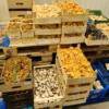 wilde champignons kopen