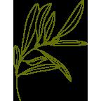 Vert Olive Logo