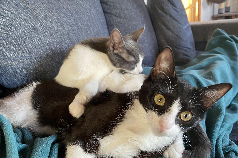 Kattungarna Vilster och Gottfrid