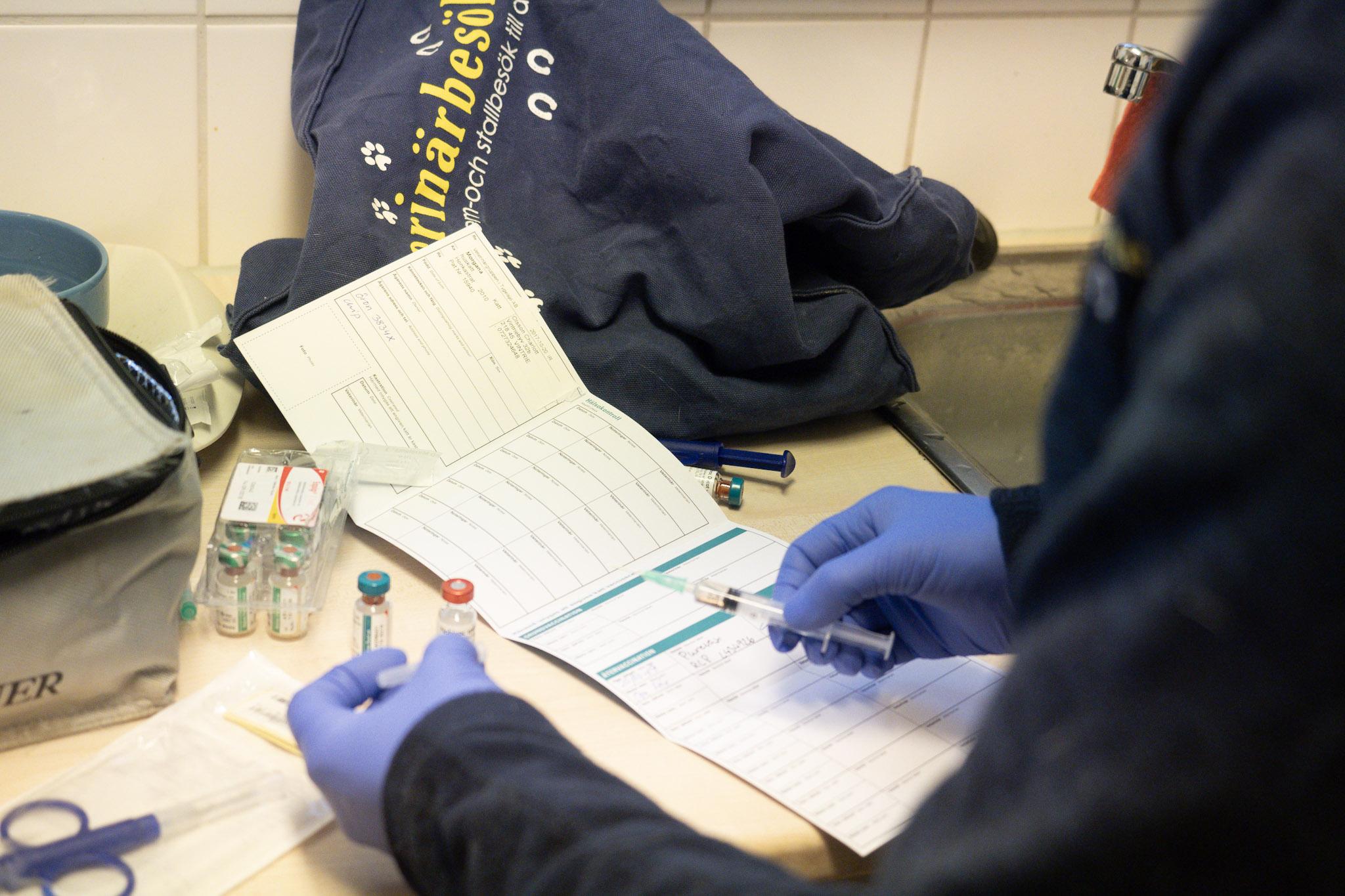 skriver journal på katt vaccination