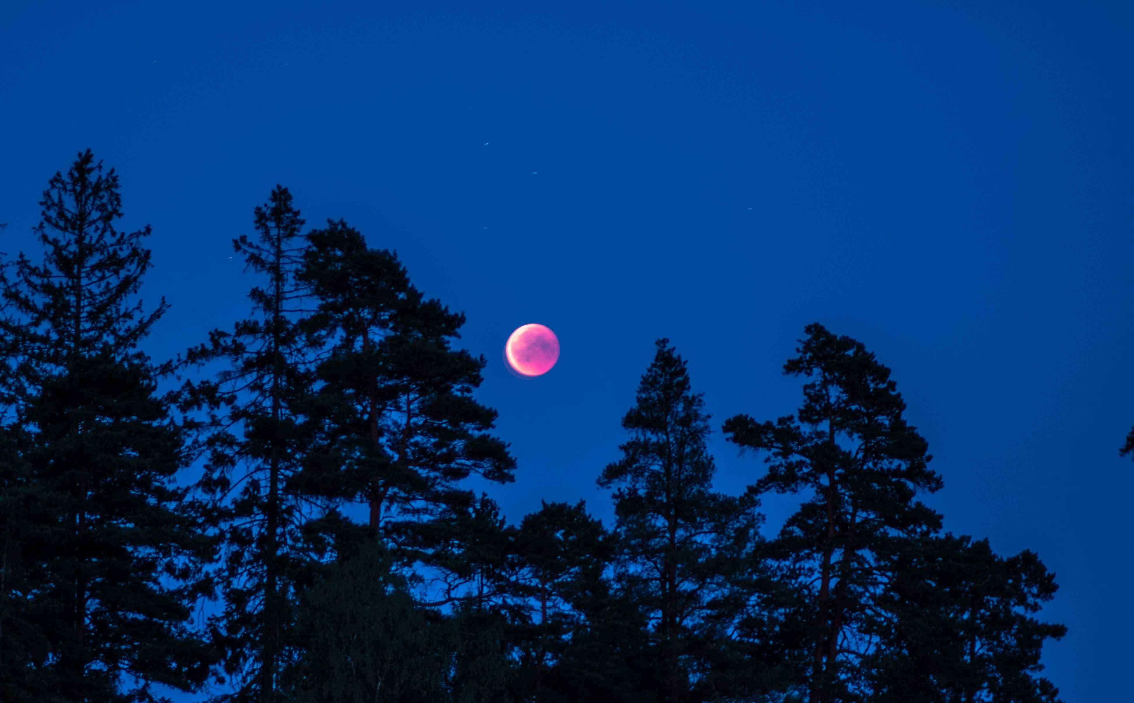 Månförmörkelse mot en mörkblå natthimmel.