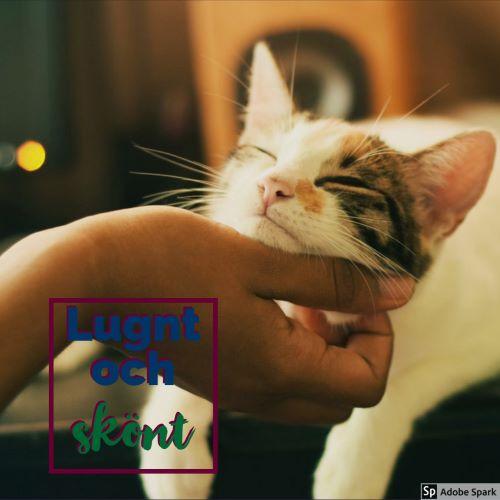 En hand kliar en avslappnad katt under hakan. Katten är sköldpaddsfärgad.