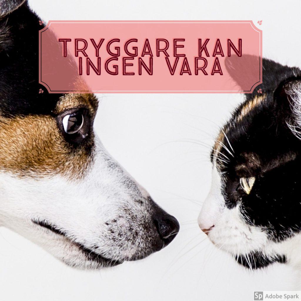 """""""Tryggare kan ingen vara"""" står det över bild på hund och katt i profil. Hembesök för djur."""