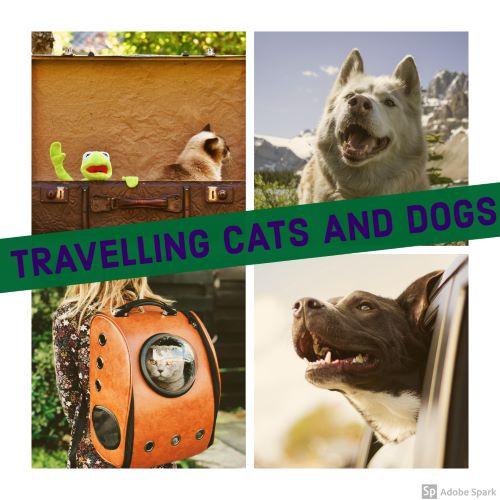 Att resa med katt och hund står på bilden. Det är ett kollage av fyra bilder, med katter och hundar som reser.