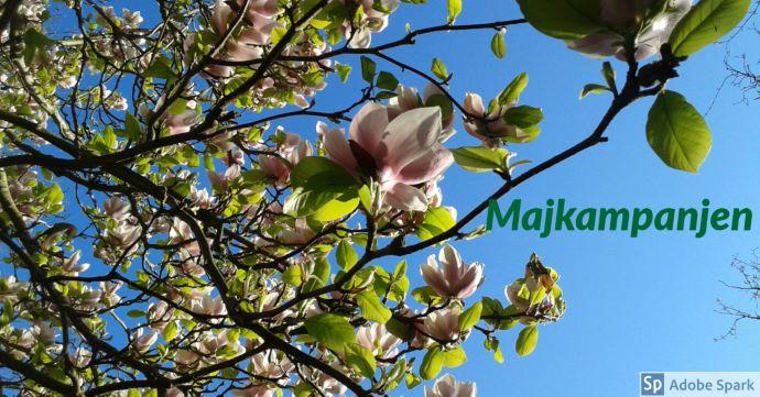 Blommande rosa magnolia mot en blå himmel. Texten Majkampanjen som betyder att du får 250 kr rabatt för ditt bokade besök i maj 2019.