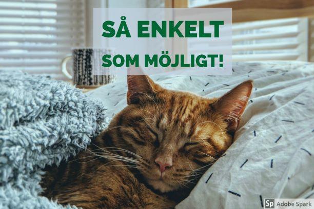 Gul katt ligger nedbäddad i en säng och ser ut att njuta i sin slummer. Du kan ge din katt en stressfri vaccination, hemma.