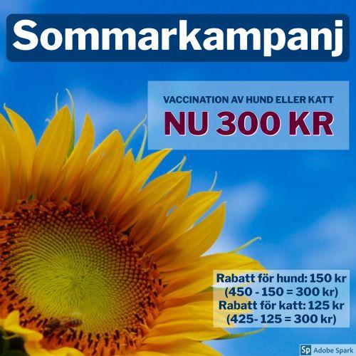 Sommarkampanj hos Vetmobilen. Gäller för vaccination av hund och katt, nu 300 kr. Bilden är en gul solros mot en blå sommarhimmel.