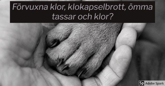 Bild i svartvitt på en människohand som håller i en hundtass. Texten handlar om klobrott. Det står Förvuxna klor, klokapselbrott, ömma tassar och klor? över bilden.
