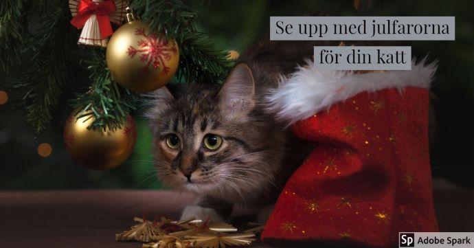 """En kattunge sitter under granen men julgranskulor som hänger ner från den. Texten """"Se upp med julfarorna för din katt"""". Bilden ska symbolisera att du inte vill ha stress av att katten blir sjuk av att äta presentsnören, till exempel."""