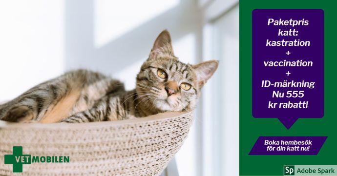 Ung spräcklig katt ligger i en korg. Till höger i bild står texten: Paketpris katt: kastration + vaccination + ID-märkning. Nu 555 kr rabatt! Boka hembesök för din katt nu!