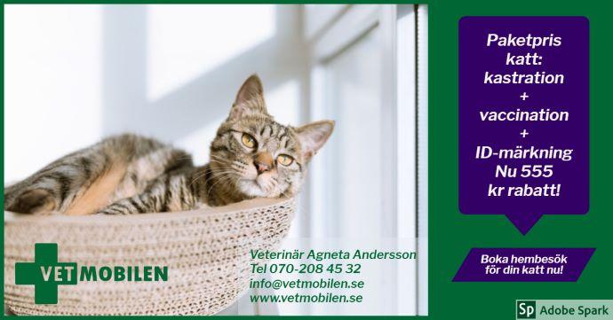 Kastrationskampanj för hankatter. En katt ligger i en korg. 555 kr rabatt vid kastrationspaket med början i januari.