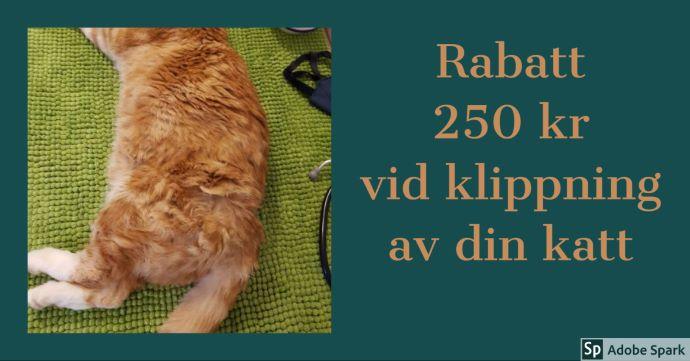 """Bild på en tovig röd katt med texten """"Rabatt 250 kr vid klippning av din katt"""". Du kan passa på att få fästingrecept utskrivet i samband med klippning av din katt."""