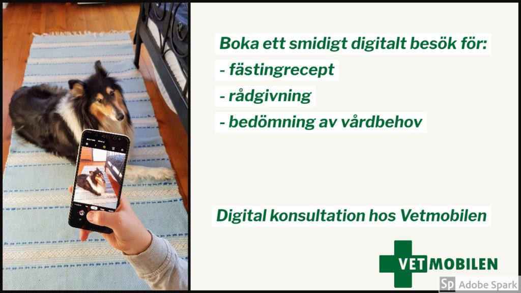 Bild på collie som blir filmad genom en mobiltelefon. Texten beskriver förberedelser inför fästingrecept vid digital konsultation hos Vetmobilen.
