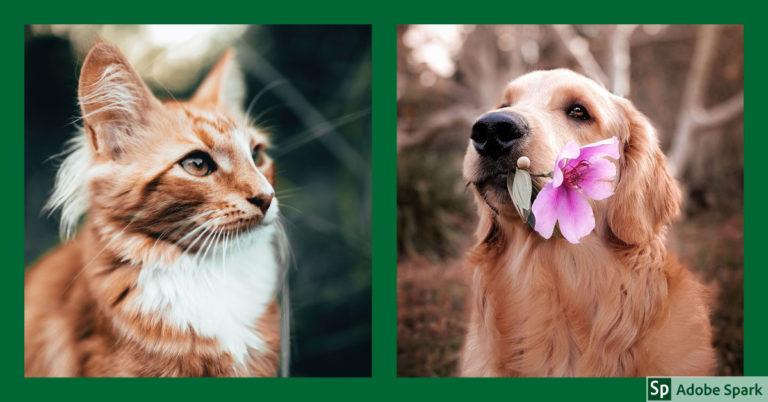 En katt och en hund i stilla stämning. En symbol för en lugn avlivning hemma.