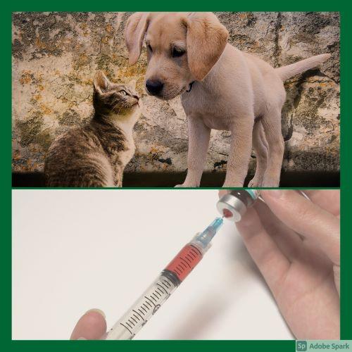 Kattunge och hundvalp i övre delen av bilden. En spruta med vaccin i nedre delen av bilden. Vaccinationspåminnelse ger rabatt vid vaccinationen.