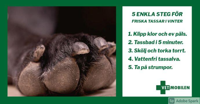 Närbild hundtass med förklaring hur du ska vårda tassarna i 5 enkla steg.